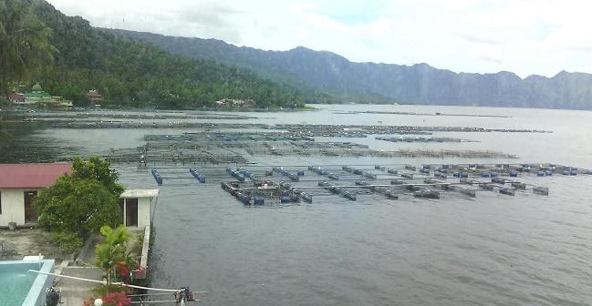 Keramba Jaring Apung (KJA) Danau Maninjau.  (lukman)