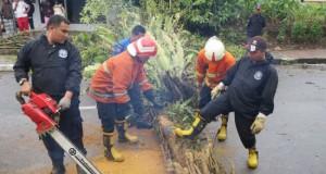 Petugas BPBD Bukittinggi dibantu masyarakat mengevakuasi pohon tumbang di Kelurahan Parik Antang.(martiapri yanti)