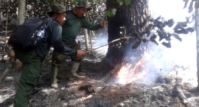 Dua petugas dari Polisi Hutan (Polhut) Kabupaten Agam, Senin (10/10) memadamkan api secara manual dilokasi kebakaran hutan pinus di perbukitan Jorong Mancuang, Nagari Padang Tarok, Kecamatan Baso, (kasnadi.np)
