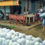 Salah seorang pekerja unit pembenihan ikan rakyat di Sitingkah Tapi Lubuk Basung  mempersiapkan pesanan bibit siap dijual kepada pembelinya. (mursyidi)