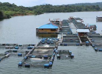 Waduk Koto Panjang. (kamparkab.go.id)
