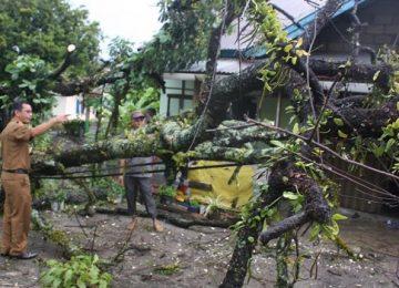 Camat Baso Surya Wendri meninjau rumah Parman di Jorong Sungai Cubadak, Baso, Senin (13/3) yang ditimpa pohon akibat hujan deras. (kasnadi.np)
