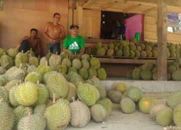 Zul penjual durian kunik di Berlan. (niko)
