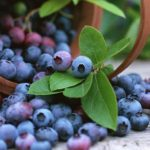 Blueberry. (*)