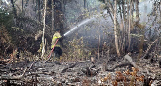 Petugas berusaha memadamkan api (maswir)