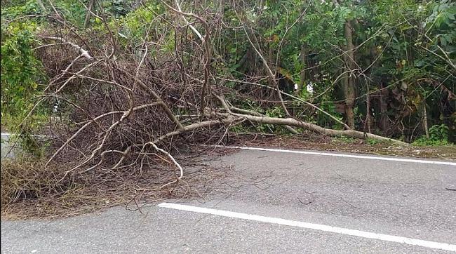 Pohon Tumbang menuju lokasi wisata Pantai Carocok dan Bukit Langkisau. (*)